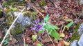 ..et un air de printemps parmi les feuilles mortes