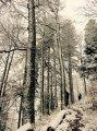 Arbres plâtrés de neige, forêt enchantée... Nous sommes gâtés!!!