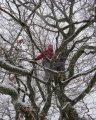 Mais où est Alice? Une jeune fille sur un arbre perché contemplait le monde... à ses pieds...