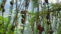 29-le-meleze-est-monoique-et-il-ne-fleurit-pas-chaque-annee