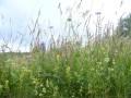 30-des-prairies-fleuries-comme-on-les-aime